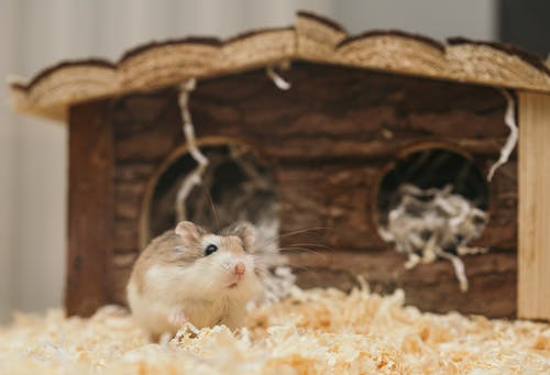 Reasons why rodent control is important in your property